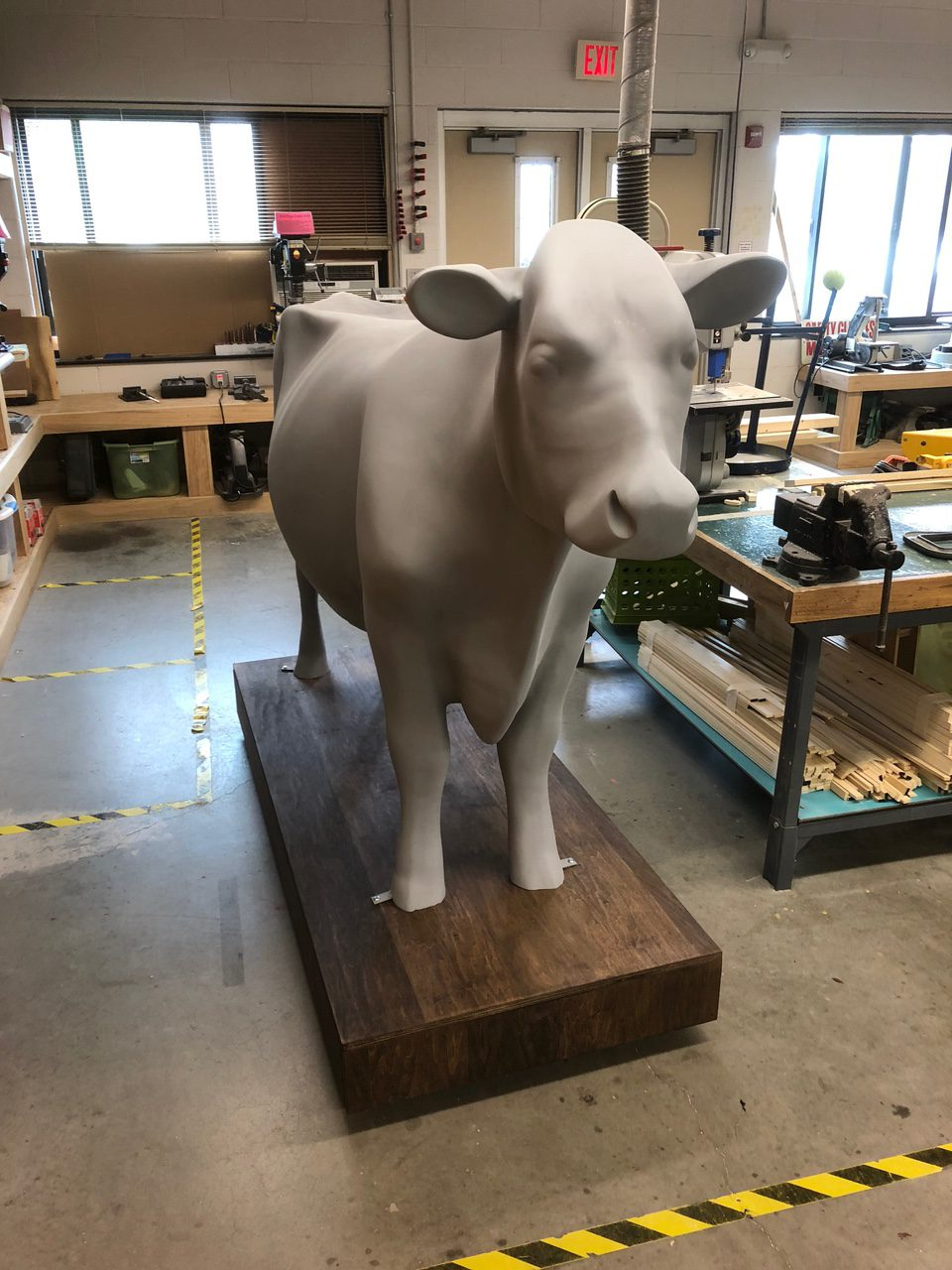 photo of the cow